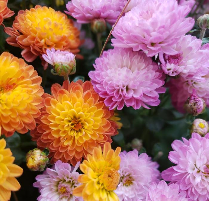Flores funeral para difuntos Valladolid