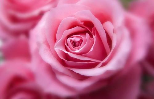Flores par condolencias, centro de rosas para el Tanatorio, flores para funeral, envio de flores para difuntos al Tanatorio, flores para cementerio
