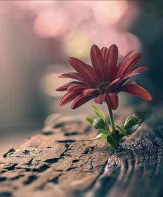 Envío de Flores para Difuntos, Flores Funerarias en Valladolid, Floristería Tanatorio en Valladolid, Flores para Difuntos, Flores Funeral envío Urgente